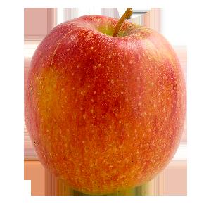 Domaine Darmandieu, pomme Brookfield en vente et à cueillir