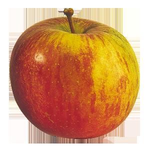Domaine Darmandieu, pomme Fuji en vente et à cueillir