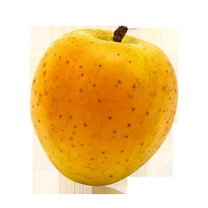 Domaine Darmandieu, pomme Gold Rush en vente et à cueillir