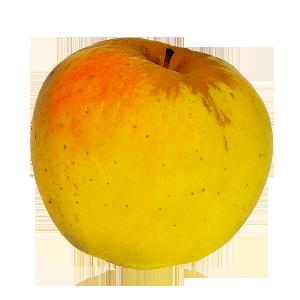 Domaine Darmandieu, pomme Opale en vente et à cueillir
