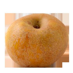 Domaine Darmandieu, pomme Reinette grise du Canada en vente et à cueillir