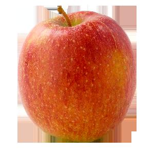 Domaine Darmandieu, pomme Braeburn en vente et à cueillir